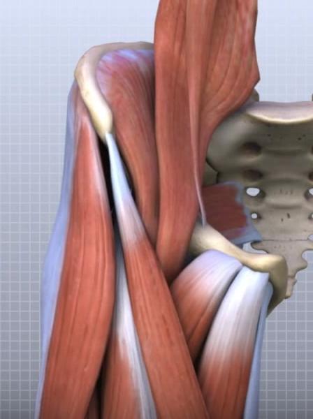 Examinarea durerii la articula?iile genunchiului